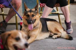 Strut Your Mutt 2018 with The Brodie Fund at The Boondocks Fishery 16 of 58