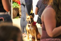 Strut Your Mutt 2018 with The Brodie Fund at The Boondocks Fishery 23 of 58