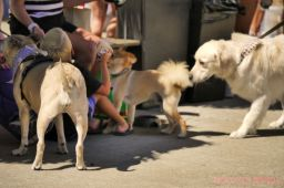 Strut Your Mutt 2018 with The Brodie Fund at The Boondocks Fishery 24 of 58