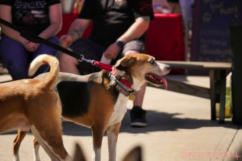 Strut Your Mutt 2018 with The Brodie Fund at The Boondocks Fishery 32 of 58