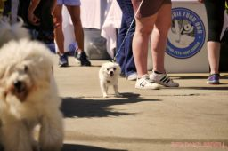 Strut Your Mutt 2018 with The Brodie Fund at The Boondocks Fishery 33 of 58
