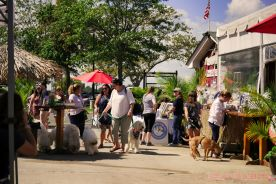 Strut Your Mutt 2018 with The Brodie Fund at The Boondocks Fishery 34 of 58