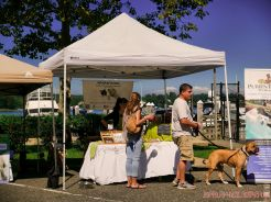 Strut Your Mutt 2018 with The Brodie Fund at The Boondocks Fishery 47 of 58
