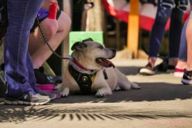 Strut Your Mutt 2018 with The Brodie Fund at The Boondocks Fishery 5 of 58