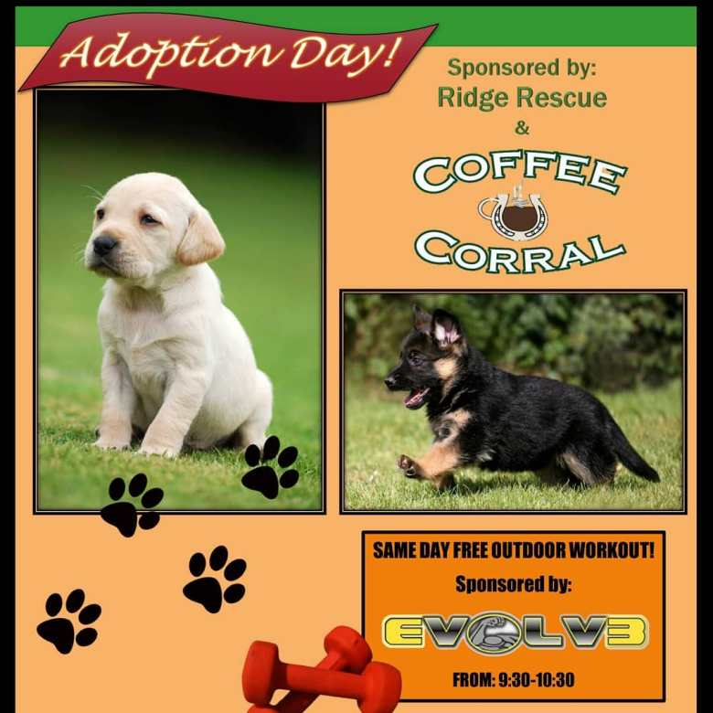 Adoption Day at Coffee Corral