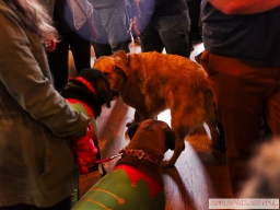 Home Free Animal Rescue with Santa Paws at Bradley Brew Project 11 of 53