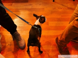 Home Free Animal Rescue with Santa Paws at Bradley Brew Project 12 of 53