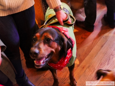 Home Free Animal Rescue with Santa Paws at Bradley Brew Project 14 of 53