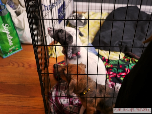 Home Free Animal Rescue with Santa Paws at Bradley Brew Project 23 of 53