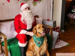 Home Free Animal Rescue with Santa Paws at Bradley Brew Project 24 of 53