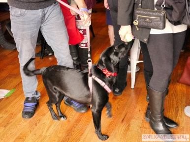Home Free Animal Rescue with Santa Paws at Bradley Brew Project 42 of 53