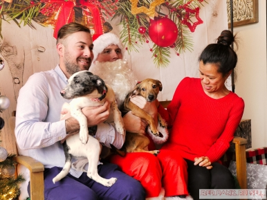 Home Free Animal Rescue with Santa Paws at Bradley Brew Project 46 of 53