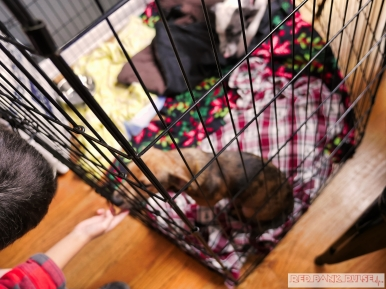 Home Free Animal Rescue with Santa Paws at Bradley Brew Project 5 of 53