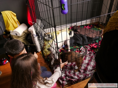 Home Free Animal Rescue with Santa Paws at Bradley Brew Project 7 of 53