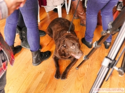 Home Free Animal Rescue with Santa Paws at Bradley Brew Project 8 of 53