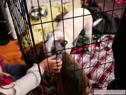 Home Free Animal Rescue with Santa Paws at Bradley Brew Project 9 of 53