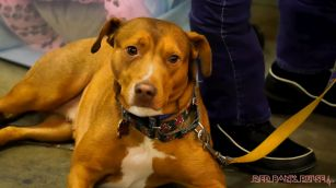monmouth county spca wine & wag at grape beginnings winery 1 of 67