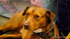 monmouth county spca wine & wag at grape beginnings winery 2 of 67