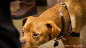 monmouth county spca wine & wag at grape beginnings winery 29 of 67