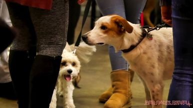 monmouth county spca wine & wag at grape beginnings winery 32 of 67