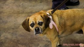 monmouth county spca wine & wag at grape beginnings winery 39 of 67