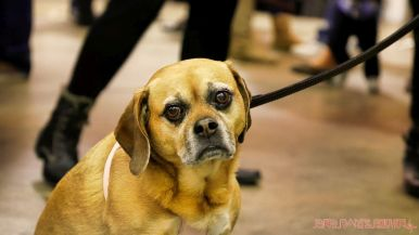 monmouth county spca wine & wag at grape beginnings winery 41 of 67