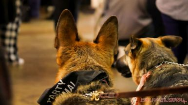 monmouth county spca wine & wag at grape beginnings winery 44 of 67