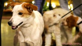 monmouth county spca wine & wag at grape beginnings winery 46 of 67
