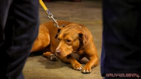 monmouth county spca wine & wag at grape beginnings winery 48 of 67