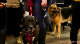 monmouth county spca wine & wag at grape beginnings winery 50 of 67