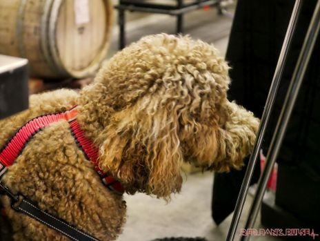 monmouth county spca wine & wag at grape beginnings winery 63 of 67