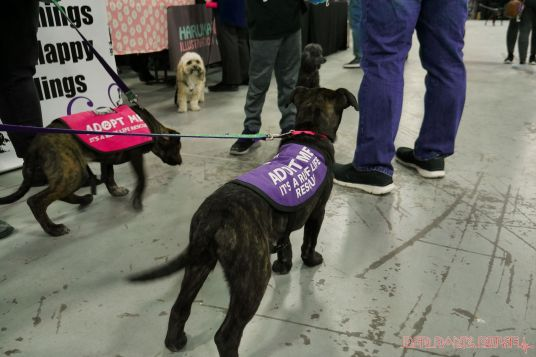 Super Pet Expo 2019 12 of 58