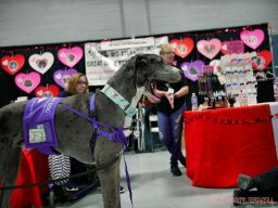 Super Pet Expo 2019 27 of 58