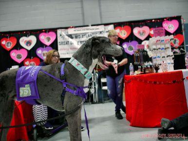 Super Pet Expo 2019 27 of 58