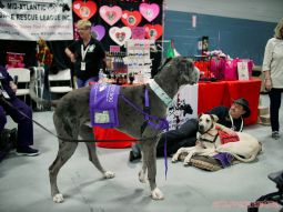 Super Pet Expo 2019 29 of 58