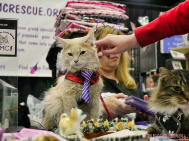 Super Pet Expo 2019 43 of 58