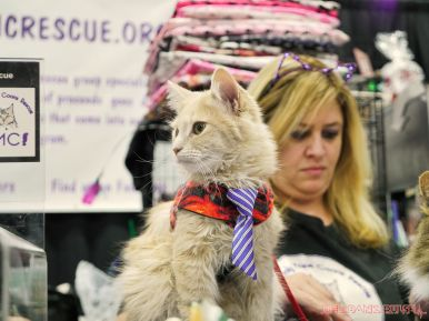 Super Pet Expo 2019 46 of 58