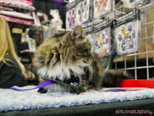 Super Pet Expo 2019 56 of 58