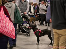Super Pet Expo 2019 Day 2 38 of 96