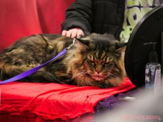 Super Pet Expo 2019 Day 2 42 of 96