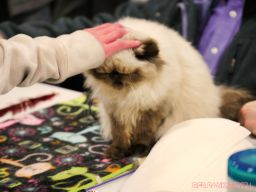 Super Pet Expo 2019 Day 2 45 of 96