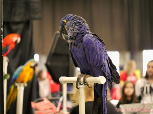 Super Pet Expo 2019 Day 2 46 of 96