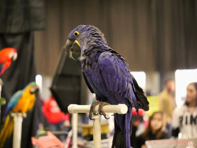 Super Pet Expo 2019 Day 2 47 of 96