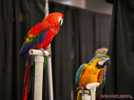 Super Pet Expo 2019 Day 2 49 of 96