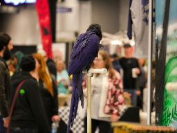 Super Pet Expo 2019 Day 2 50 of 96