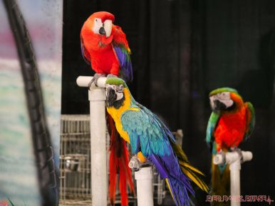Super Pet Expo 2019 Day 2 53 of 96