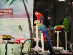 Super Pet Expo 2019 Day 2 54 of 96