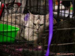 Super Pet Expo 2019 Day 2 55 of 96