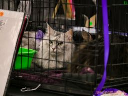Super Pet Expo 2019 Day 2 56 of 96