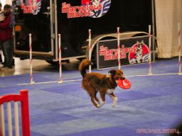 Super Pet Expo 2019 Day 2 64 of 96
